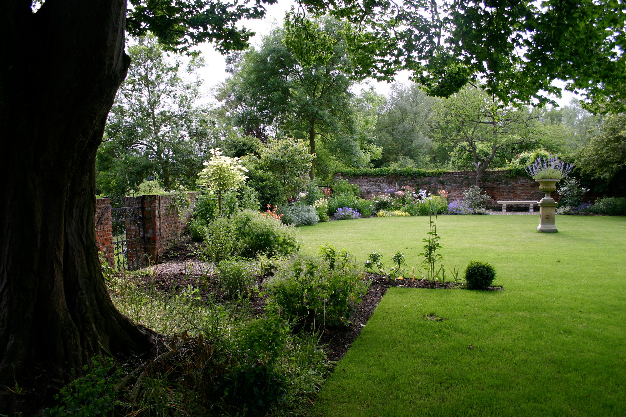 garden-with-tree